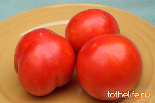 spelii-tomat