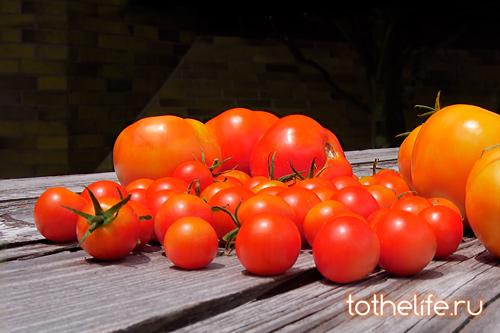 yarkii-tomat